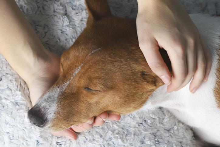 5 Things to do Before Your Pet Crosses the Rainbow Bridge