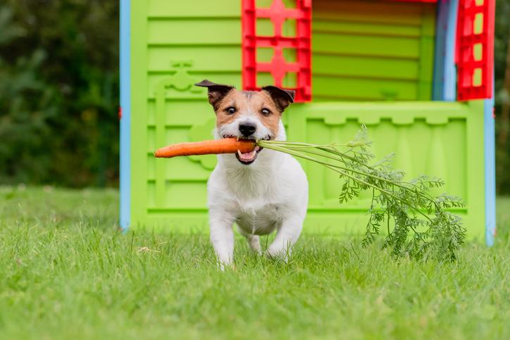 Planting a Dog-Friendly Edible Garden