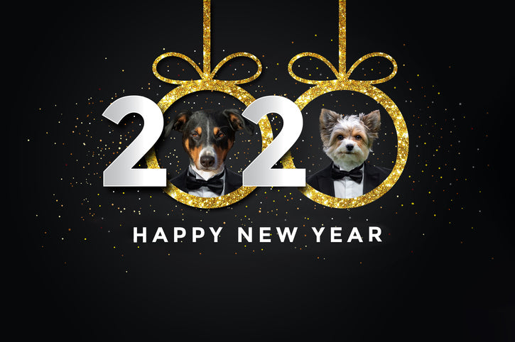 New Year's Resolutions for Dog Lovers