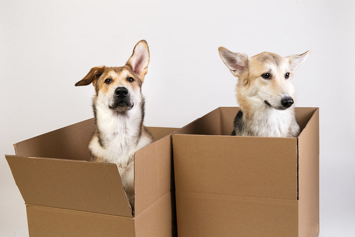 Top 10 Dog Subscription Boxes
