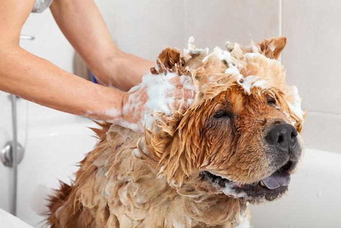 Best (and Safest) Dog Shampoos of 2019