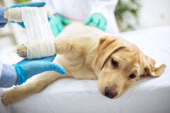 What to do Before Having Your Pet Spayed/Neutered