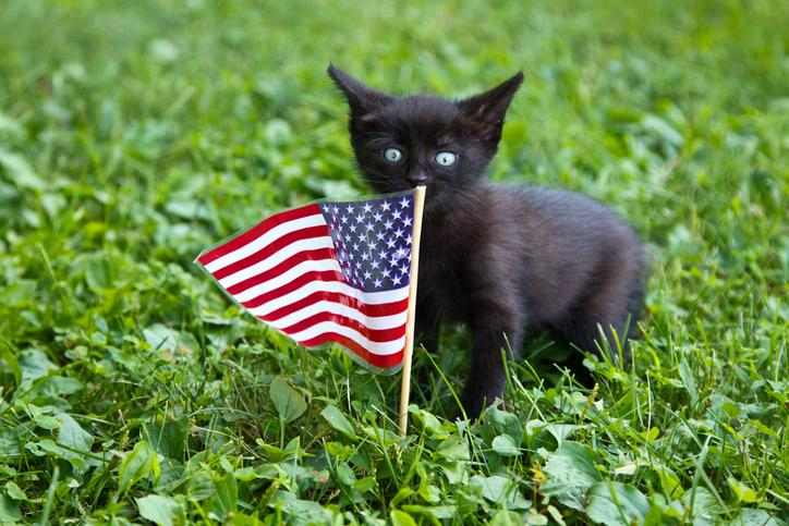 4th of July Cat Safety Tips