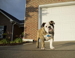 How to be a Good Dog Neighbor