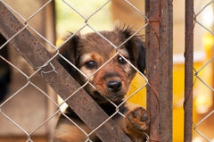 How to Help Animal Shelters When You Can't Adopt
