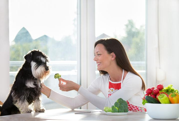 Top 8 Foods to Feed Your Dog