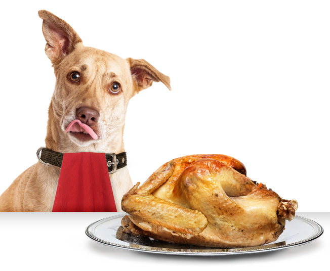 Including Your Dog in Your Thanksgiving Celebrations