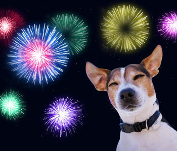 Preparing Your Dog For Fireworks