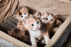 A Checklist For Bringing Home a Kitten