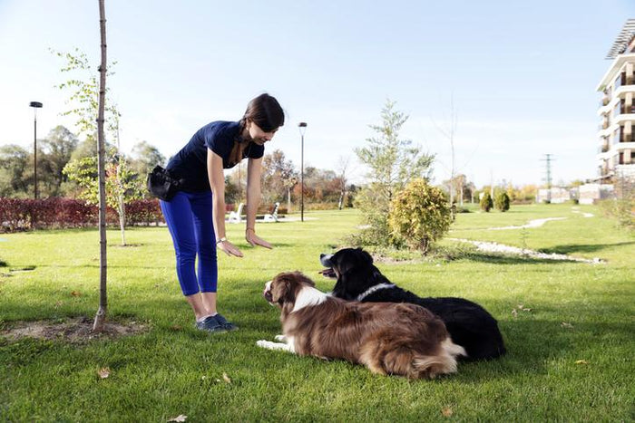 Dog Training Tips for a Busy House