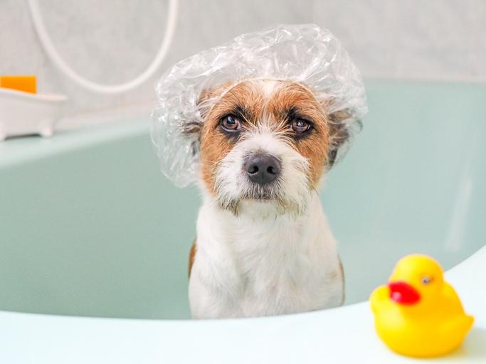 Bath Tips to Teach Your Clients: Washing a Dog
