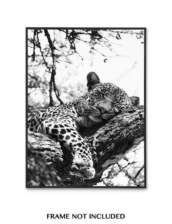 Snoozing Leopard