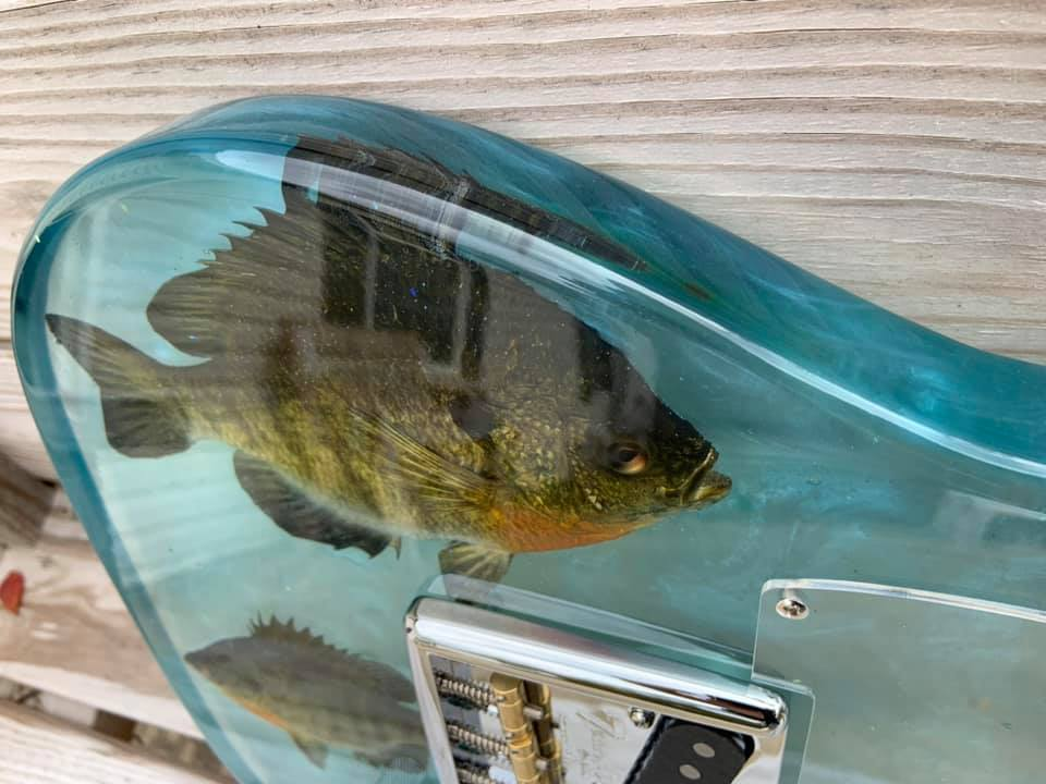 Bluegill fish encased in epoxy guitar using WiseBond DEEP POUR