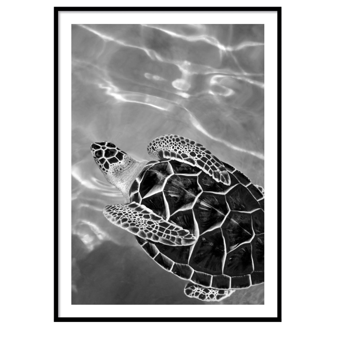 The turtle poster