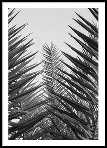 Palm leafs poster