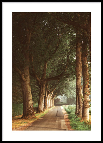 Tree avenue poster