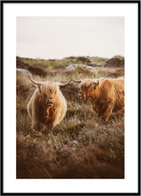 Indlæs billede til gallerivisning Home of highland poster