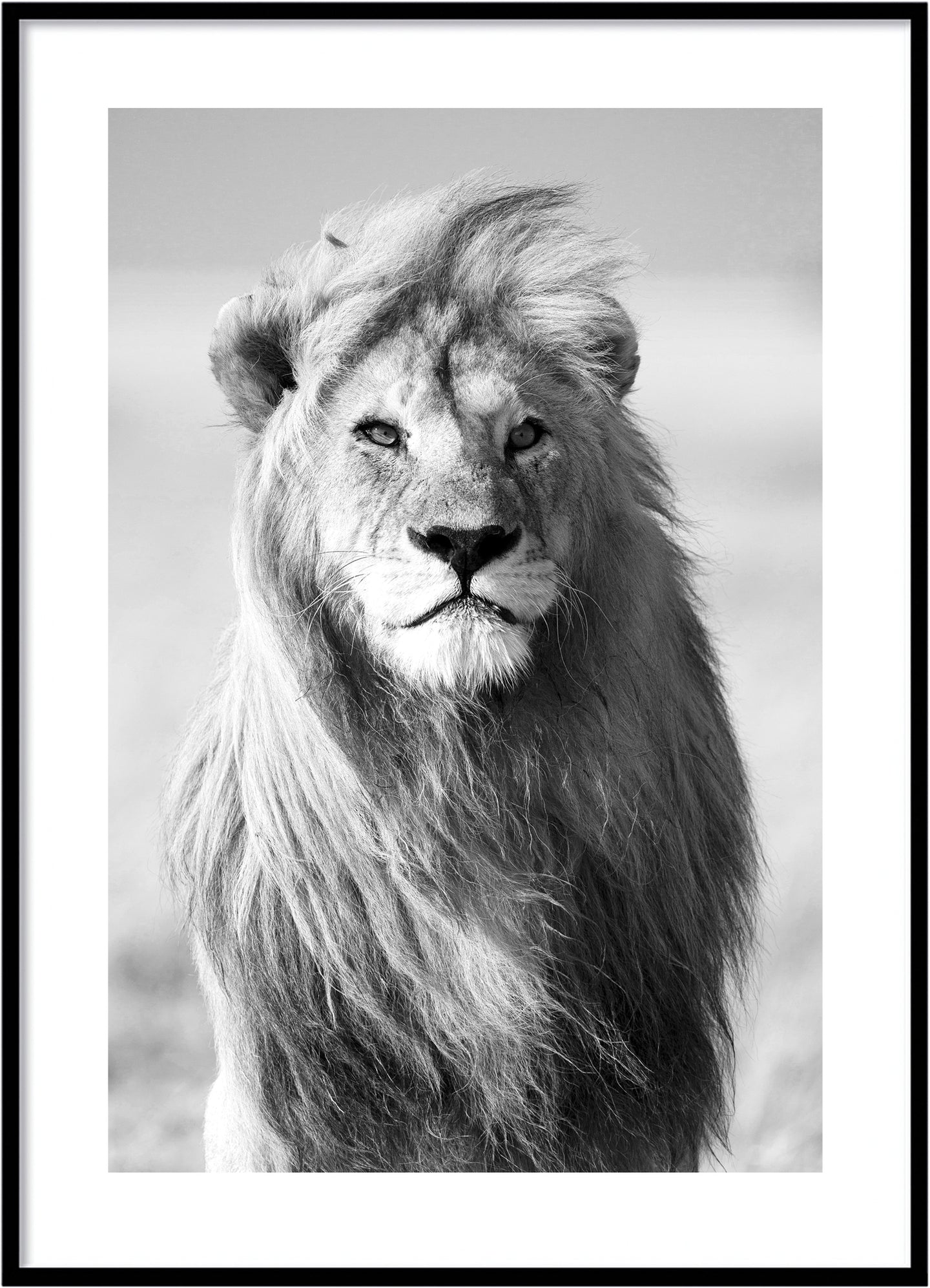 King of lion poster