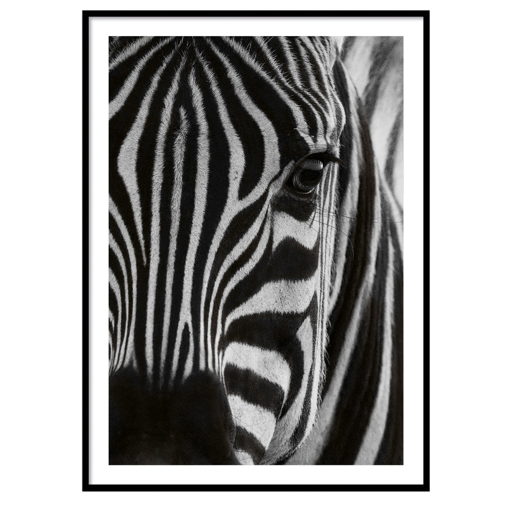 Zebra close up  poster