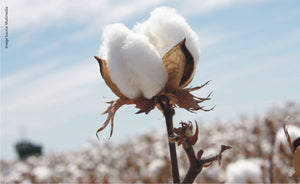More good news about organic cotton