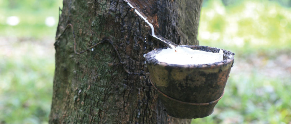 Organic latex tapped from the rubber tree