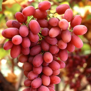 Grapes - Crimson Seedless D/Red