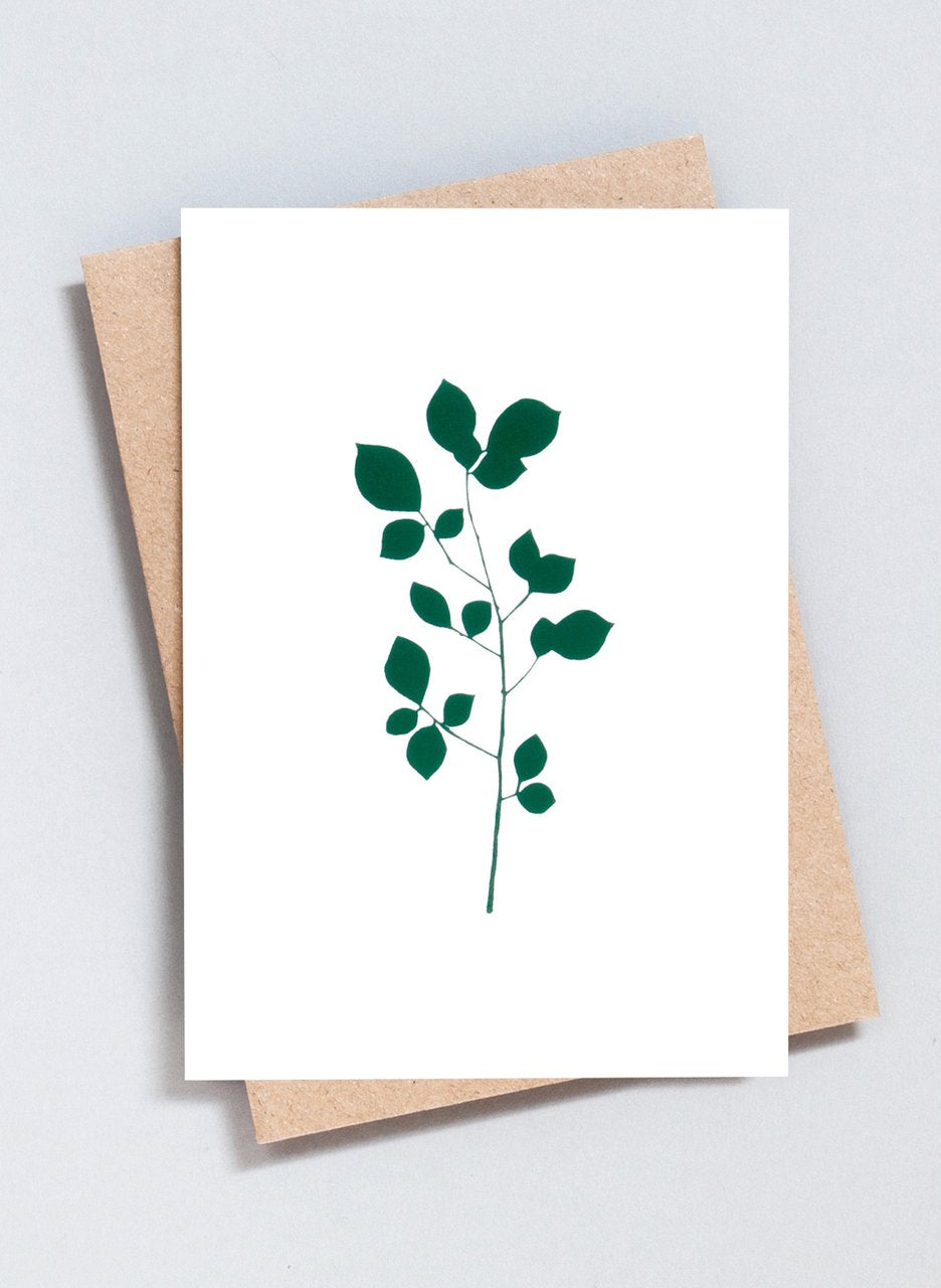 Ola Greeting Cards The Botanical Collection