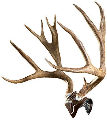 Skull Hooker Bone Bracket European Trophy Mount