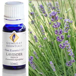 Gumleaf Pure Essential Oil - French Lavender