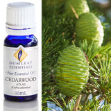 Gumleaf Pure Essential Oil - Atlas Cedarwood
