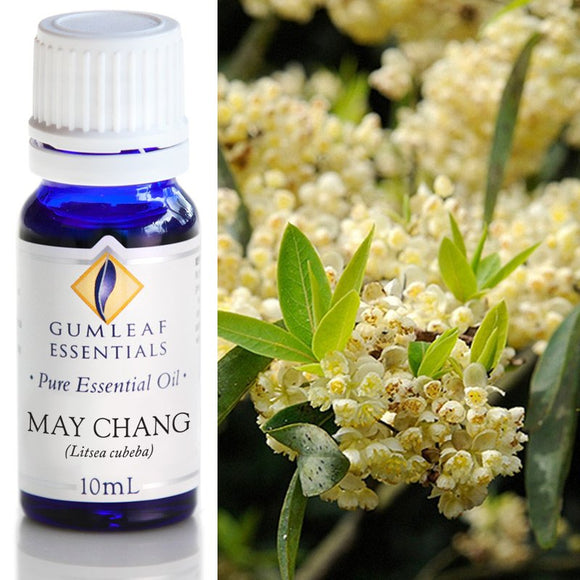 Gumleaf Pure Essential Oil - May Chang