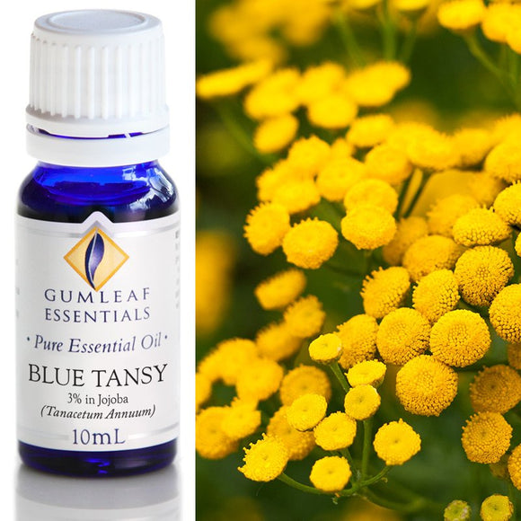 Gumleaf Pure Essential Oil - Blue Tansy 3% in Jojoba