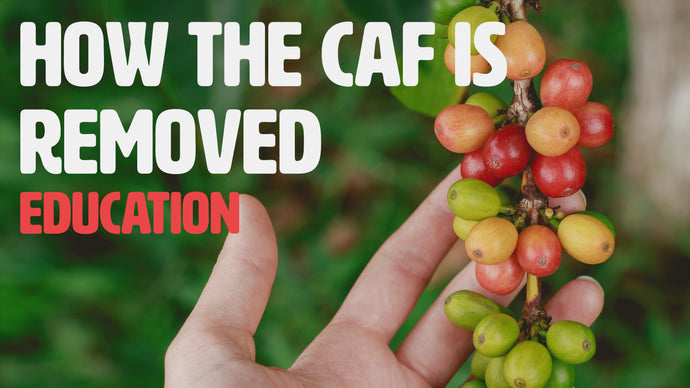 How caffeine is removed from a coffee bean?