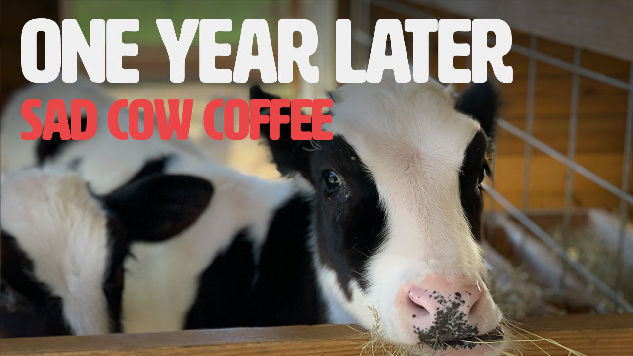 Sad Cow Coffee - Decaf Coffee one year later
