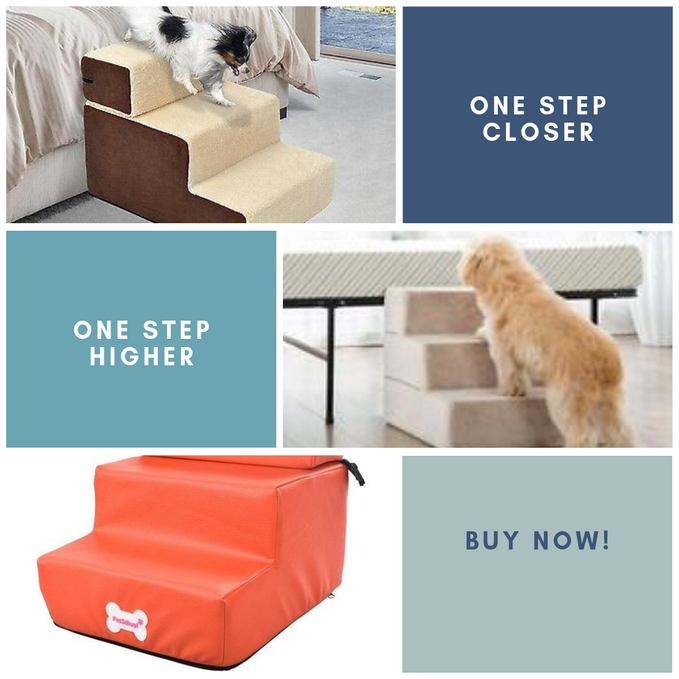 Dog Stairs - Your dog needs it more than you know!