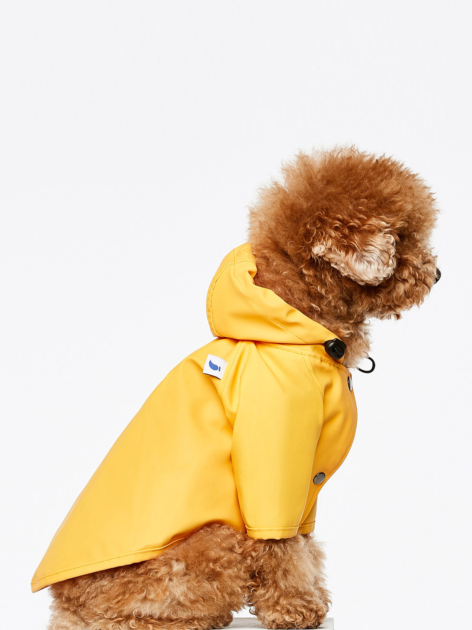 Sarah dog rain coat, yellow