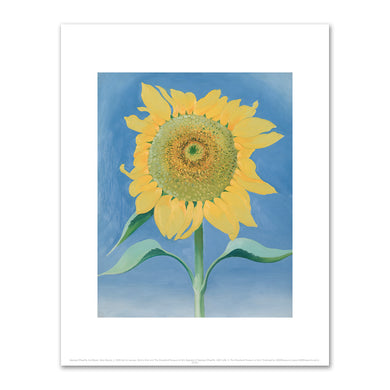 Georgia O'Keeffe, Sunflower, New Mexico, I, 1935, The Cleveland Museum of Art. Fine Art Prints in various sizes by Museums.Co