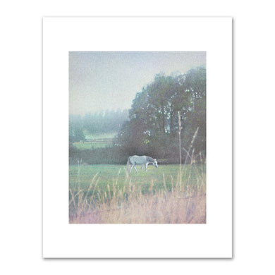 Kirsten Söderlind, White Horse, 1998, Fine Art Prints in various sizes by Museums.Co