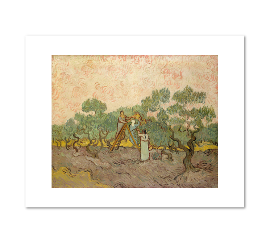 Vincent van Gogh, Women Picking Olives, 1889, Fine Art Prints in various sizes by Museums.Co