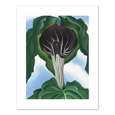 Georgia O'Keeffe, Jack-in-the-Pulpit No. 3, 1930, Fine Art Prints in various sizes by Museums.Co