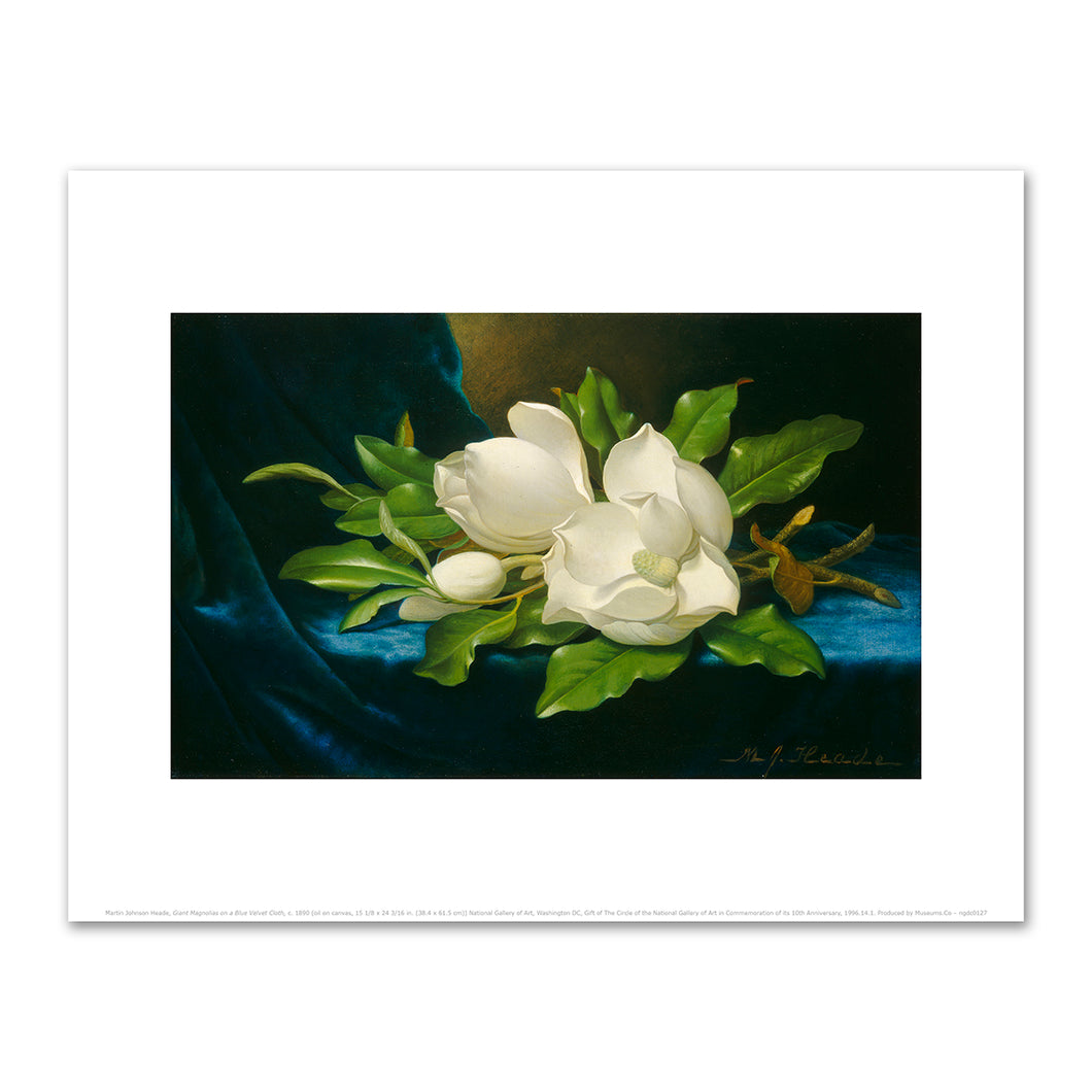 Martin Johnson Heade, Giant Magnolias on a Blue Velvet Cloth, c. 1890, Fine Art Prints in various sizes by Museums.Co