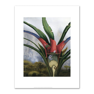 Alexis Rockman, Bromeliad: Kaieteur Falls, 1994, Fine Art Print in various sizes by Museums.Co