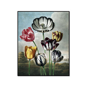 Tulips by Robert John Thornton Artblock