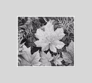 Close-up of leaves by Ansel Adams Artblock