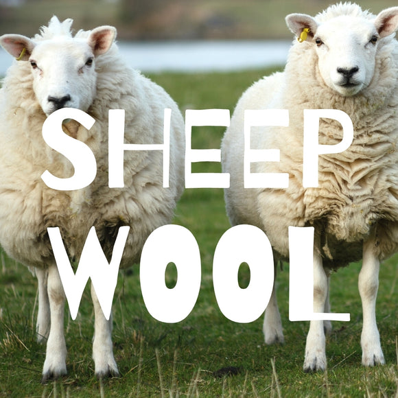 Sheep Wool Fibers