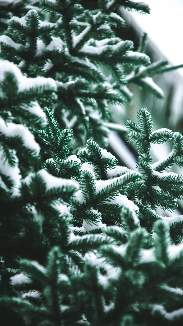 Close Up Photography Of Snow Covered Green Pine Tr iPhone XS Wallpaper