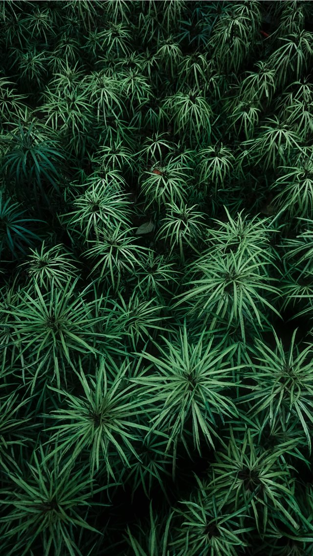 Green Plants At Daytime iPhone XS Wallpaper