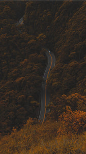high angle photography of road between trees iPhone XS HD wallpaper