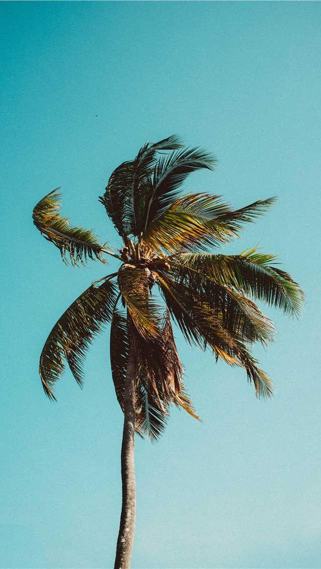 Low Angle Photography Of Coconut Tree iPhone XS Wallpaper