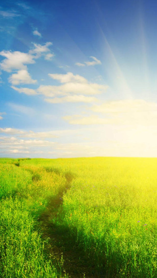 Nature Sunshine Grassland Field Iphone 11 Pro Max Wallpaper